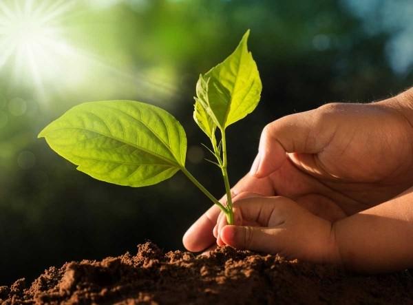 La sostenibilità ambientale degli isolanti URSA