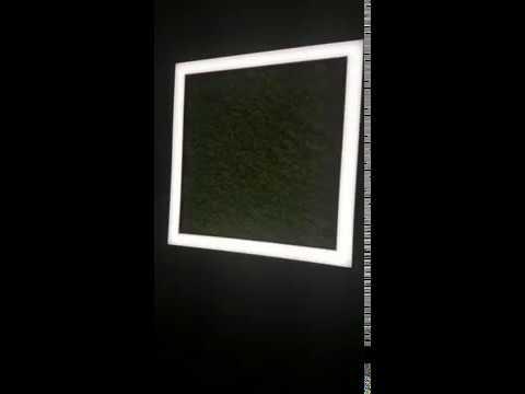 Serie TILE-D Art. 9738 Linea ARCHITECTURAL con Lichene stabilizzato Alta Qualità
