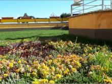 Ambiente: tetti verdi in città anche d'inverno per contrastare eventi meteo estremi